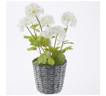 Composition fleurs artificielles Boule de neige, pot enosier H50 cm