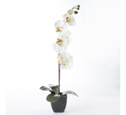 Orchidée artificielle blanche en pot H55cm