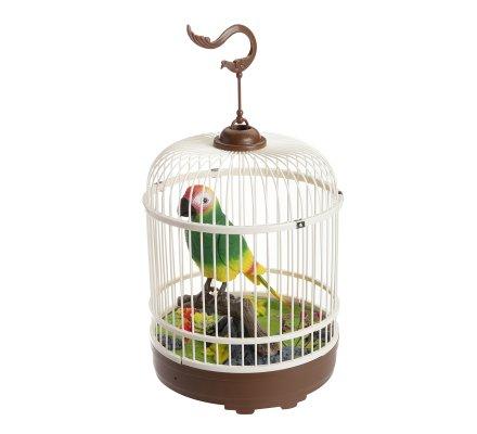 Oiseau dans sa cage qui parle chante et répète tout, détecteur de sons et mouvements